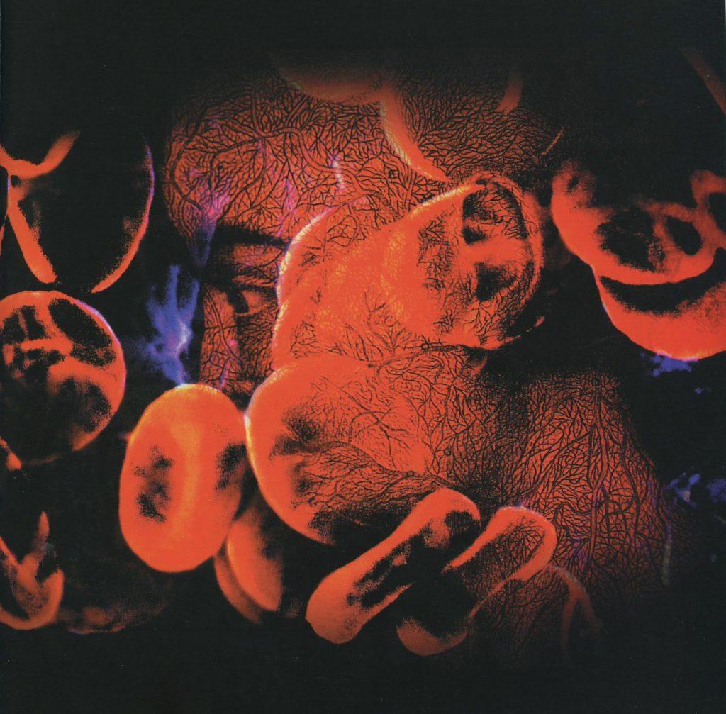 Globuli narranti, 2000, lambda print, 108 x 140 cm