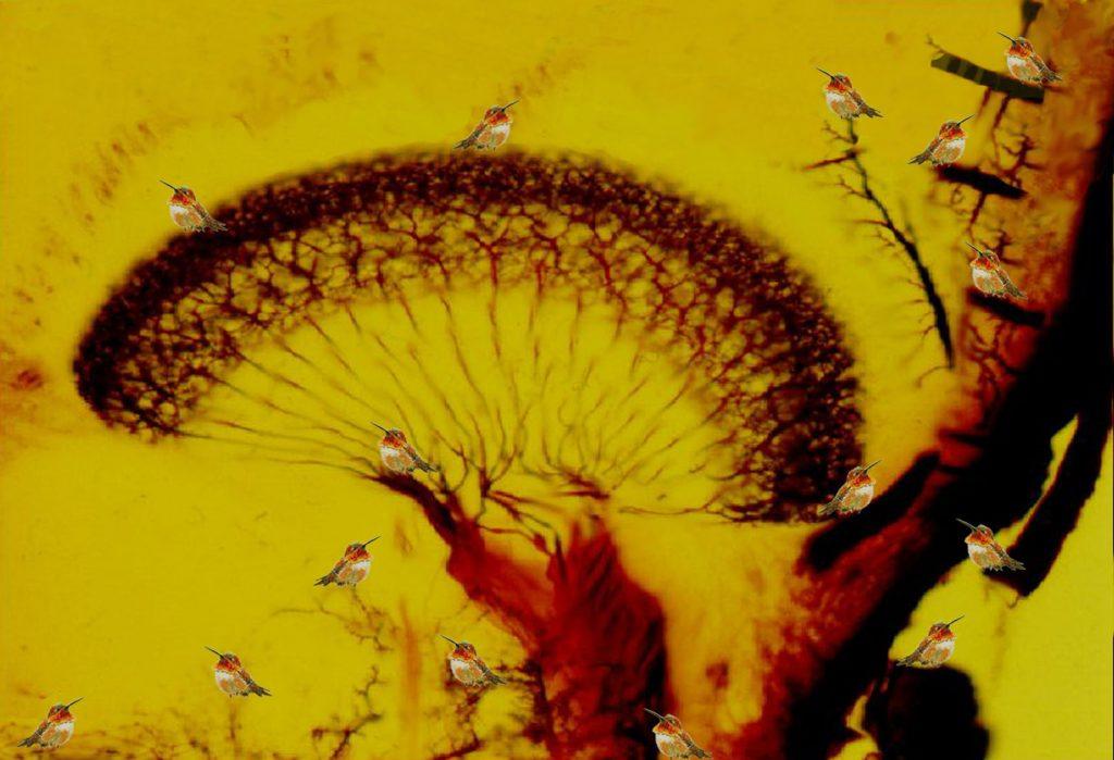 Rufous and neurons in the lobula, 2006, stampa digitale e acrilico su carta cotone, 125 x 84,5 cm
