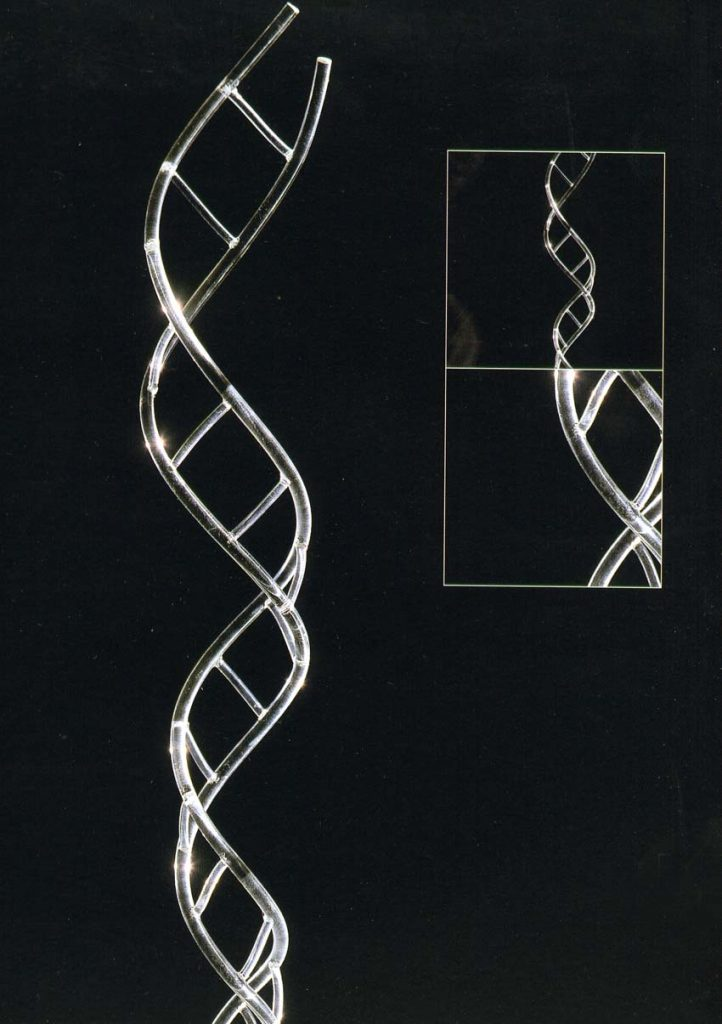Scala del DNA, 2000, plexiglass (prototipo)