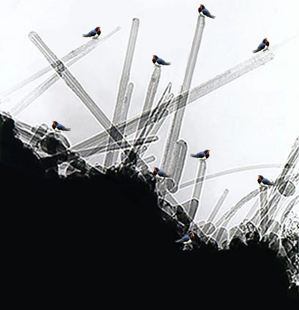 Swallows on crystals, stampa digitale e acrilico su cotone, cm. 70x72,5